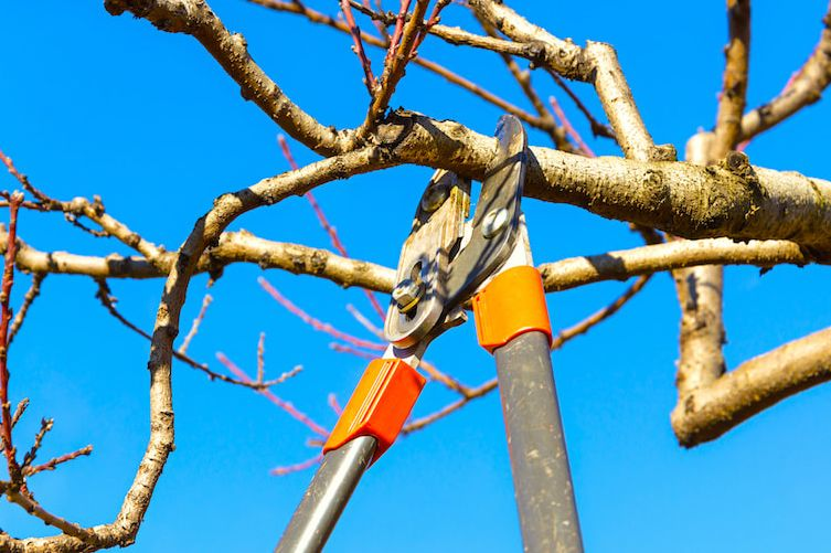 Does Home Owners Insurance Cover Tree Trimming? - Chart Attack
